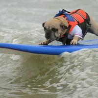 Adrenalinfüggő kutyák