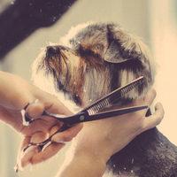 Mi történik a kedvenceddel a kutyakozmetikusnál?