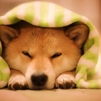 Egy vigyorgó kutya Japánból