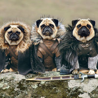 Trónok harca kutyául
