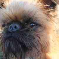 Sir Ewok - Simon, a buzi kutyája
