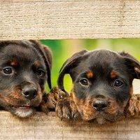 3 tipp a kutyánk élettartamának növelésére