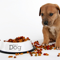 Milyen etetőtálat válassz a kutyádnak?