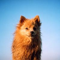 Lomográfiák kutyákkal