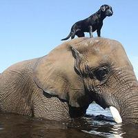 Szokatlan állati barátságok
