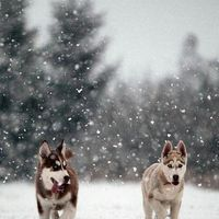 Hóbolond kutyák