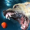 Napi cukiság: pancsoló kutyusok