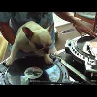 Kutya DJ