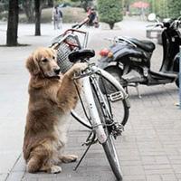 Tutibiztos bringalakat