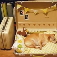 Bútorból kutyafekhely  - miért ne költsd a pénzed pazar kutyaágyakra?