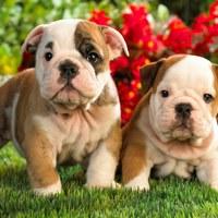 9 tipp, hogyan nevezd el a kutyádat