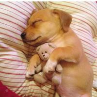 Alvó kölyökkutya válogatás