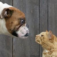 Kutya vs macska
