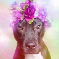 Virágba borult pitbullok