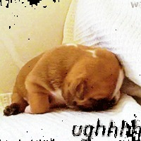 13 animgif álomba szenderülő kutyákról