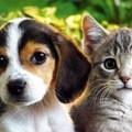 7 ok, amiért a kutyák jobbak, mint a macskák