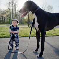 Kisgyerekek nagy kutyával