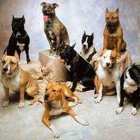 Mit árul el rólad a kutyád?