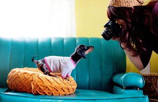 Tacsi, a hét kutyája - Vadászkutyból igazi urbánkuty