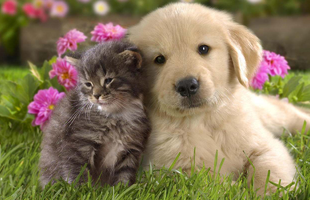 5 tipp, hogyan veheted rá a kutyát, hogy ne nyírja ki a macskádat