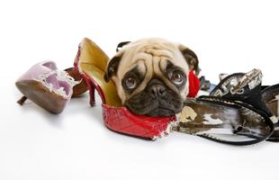 Hogyan akadályozd meg, hogy a kutyád mindent szétrágjon?