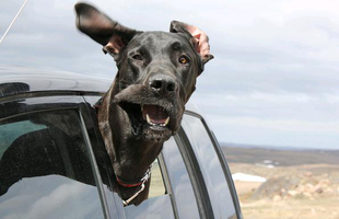 Kocsiba be, ablakot le, könyököt ki, egyesbe be!