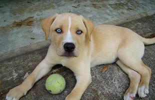 Keverék vagy dizájner kutya?