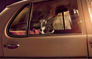 Némaság - autóban hagyott kutyák