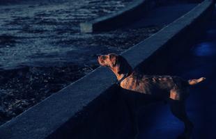 Paul Walkner - Ahogy a kutyákat látja