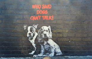 20 kutyás graffiti amit szeretünk