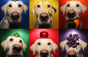 Milyen gyümölcsöket adhatsz a kutyának?