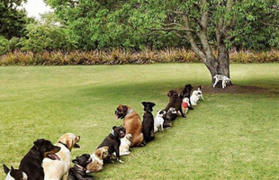Kutyamód védjük a természetet!