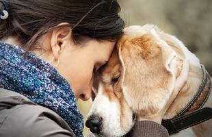 7 dolog, amit a kutyád megérez rajtad