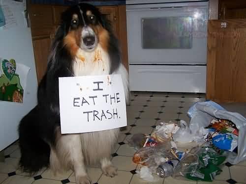 4funny-dog-i-eat-the-trash.jpg