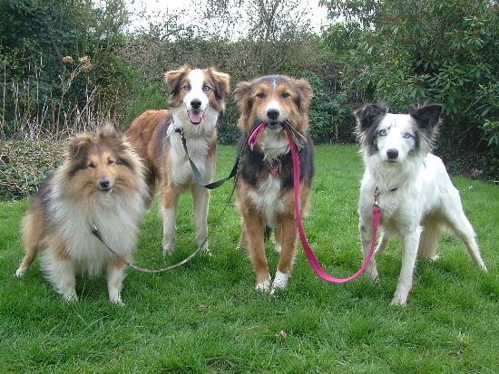 5Why-Do-People-Need-Dog-Walkers.jpg