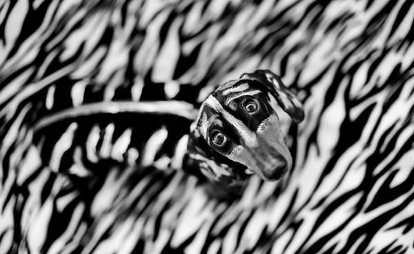 Blacknwhite-600x368.jpg
