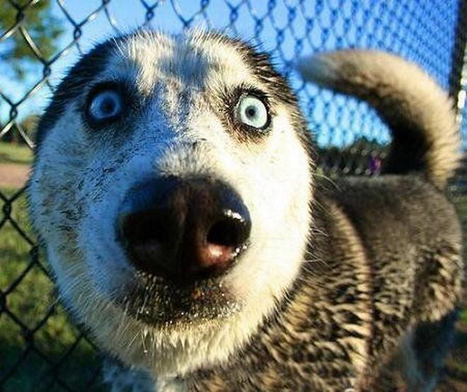 CRAZY-DOGS-dogs-13655070-660-554.jpg