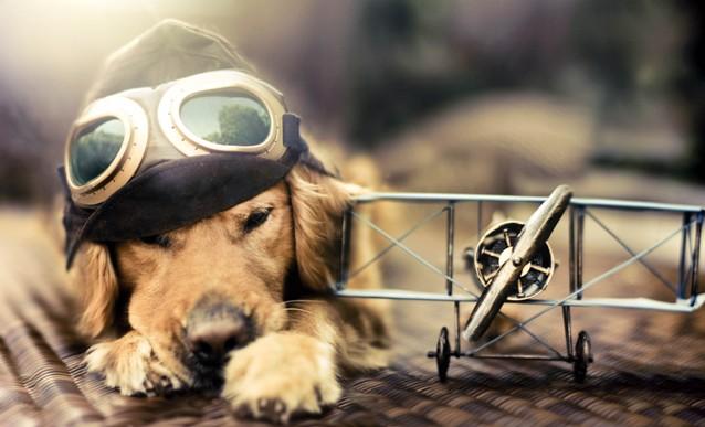 Dog-Plane.jpg