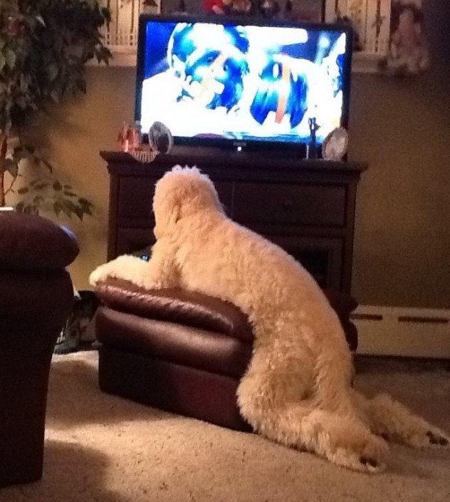 Dog-Watching-TV.jpg