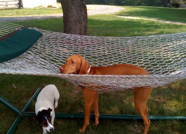 Dog-and-Hammock.jpg