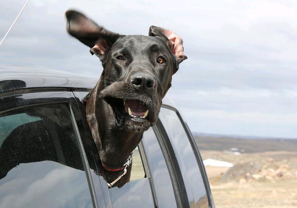 Dogs-In-Car-Windows-15.jpg