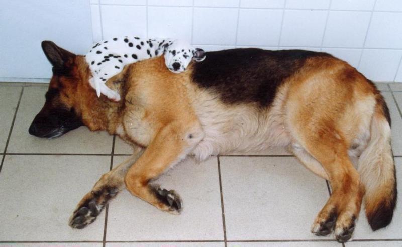 Dogs_Sleeping_9.jpg