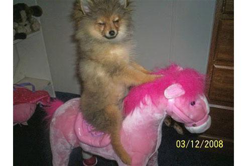 Funny-dog-pictures.jpg-99.jpg