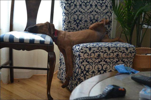 Lazy-dog-2.jpg