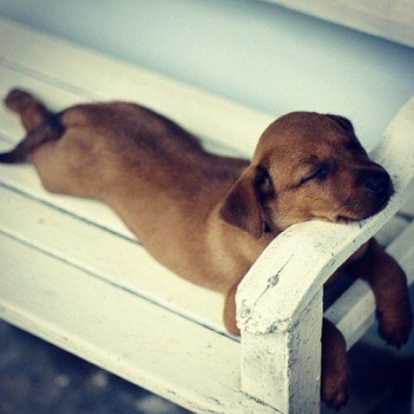 Lazy-dog-3.jpg