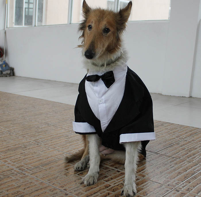 Pet-clothes-dog-clothes-large-dog-formal-dress-wellsore-clothes.jpg