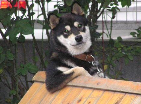 RELAXED-DOG-IN-BUCKET-2.jpg