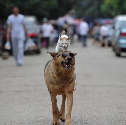 The-Coolest-Dog-Cat-In-The-World-Ever-.jpg