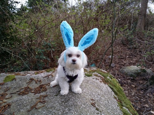Toby-BarkBox-Easter-600x450.jpg
