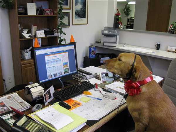 Working_like_a_Dog_Libby-600x450.jpg